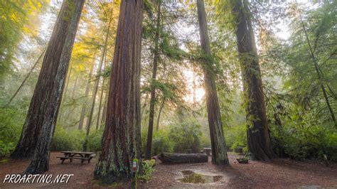 Jedediah Smith Redwoods State Park Campground 3 Proartinc