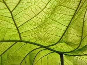 Wirkung Der Farbe Grün : wirkung der farben malerei strobl st johann im pongau salzburg vollw rmeschutz fassaden ~ Markanthonyermac.com Haus und Dekorationen