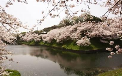 Sakura Japan Garden Water River Desktop Wallpapers