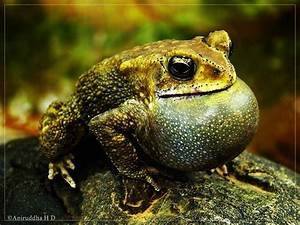 croaking - definition - What is