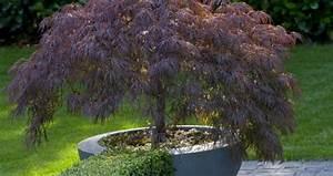 Balkonpflanzen Sonnig Pflegeleicht : hohe sichtschutz pflanzen pflanzen als sichtschutz hohe pflanzen als sichtschutz sichtschutz ~ Frokenaadalensverden.com Haus und Dekorationen