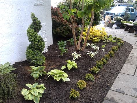 small landscape plants nice small evergreen trees for landscaping landscape