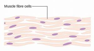 Protozoa Cell Diagram