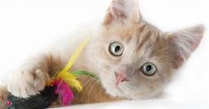 Jouets Pour Chats D Appartement : jouets pour chat et chaton lesquels choisir le jeu ~ Melissatoandfro.com Idées de Décoration