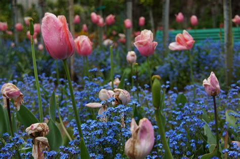 Claude Monet Part 2 – The Artist's House, Giverny, France