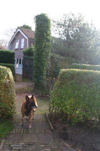 Haus Angelika Mit Eingezäunten Garten In Domburg Hund