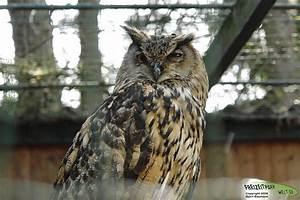 Www Wg Welt De : uhus tier und freizeitpark th le freizeitpark ~ Frokenaadalensverden.com Haus und Dekorationen