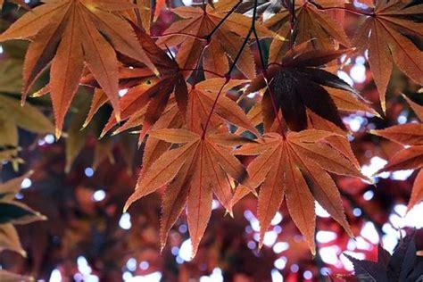 Free Image on Pixabay - Autumn, Autumn Leaves, The Leaves ...
