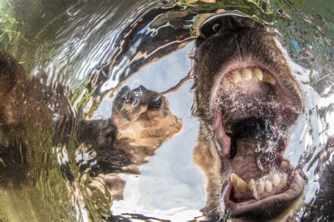 nature photographer   year contest  winners