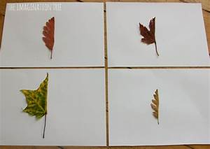 Mirror Leaf Drawings: Nature Art - The Imagination Tree