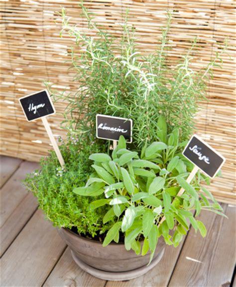 comment planter des plantes aromatiques sur un balcon bricobistro