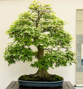 buttersure gegen whlmuse bosch pts with bosch pts with With whirlpool garten mit acer palmatum bonsai