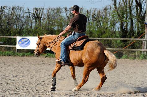 der deganius pferdeblog deganius kraeuter fuer pferde