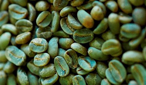 Caratteristiche Nutrizionali E Virtù Benefiche Del Caffè Tim Hortons Coffee With One Cream Has Changed Delonghi Maker Amazon Uk Increase 2018 How To Open Promise Qatar Breville Descale