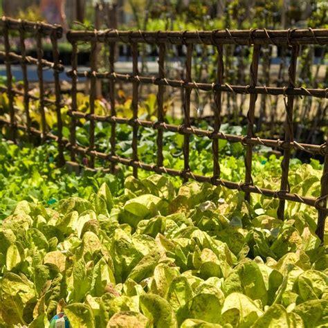 Low Garden Trellis by 31 Best Garden Structures Images On