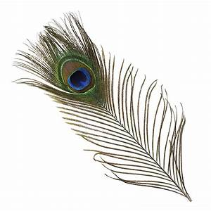 Peacock Feather Eyes Natural - Natural - Packaged Peacock ...
