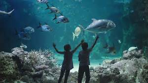 sea sydney aquarium zspace