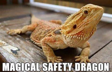 Alternative Animal Names Meme