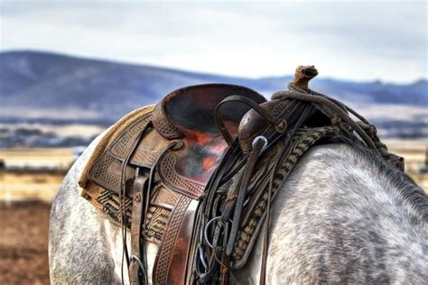 Vecais vīrs un viņa zirgs | 7 gudrie