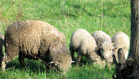 compost sheep manure garden guides