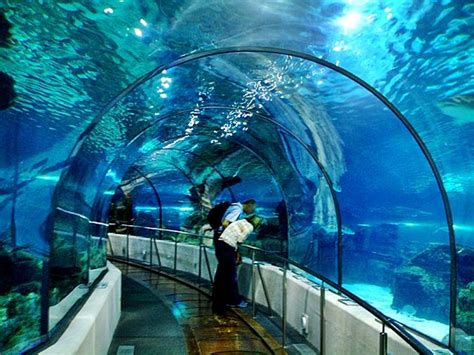 аквариум барселоны bild l aquarium de barcelona barcelona tripadvisor