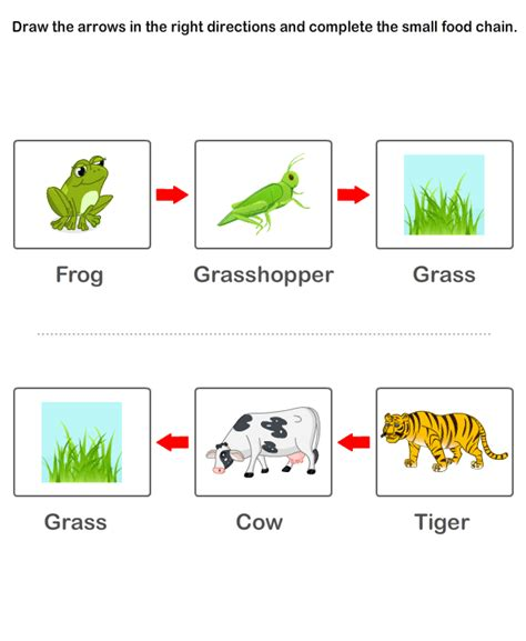 Food Chain Worksheets Kids  Preschool Worksheets