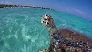 Akumal Sea Turtles  U0026 Cenotes Sac Ac T U00fan