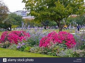 Les Fleurs Paris : des fleurs dans les jardins des tuileries paris france ~ Voncanada.com Idées de Décoration