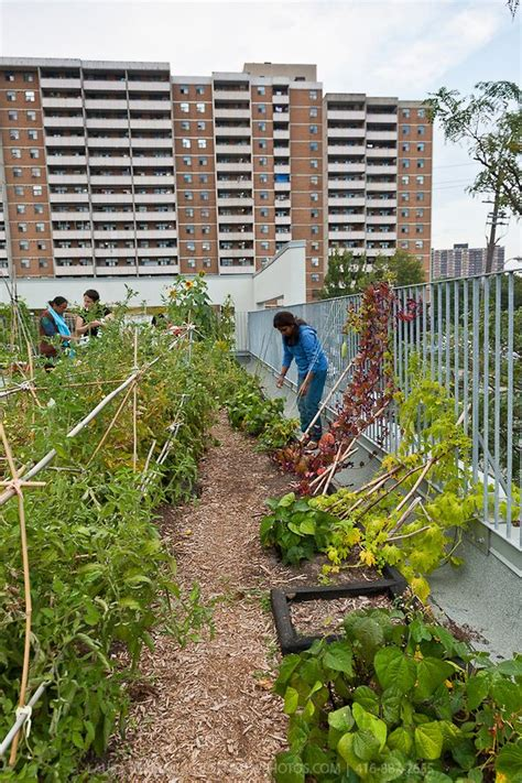 vegetable roof garden 78 best images about urban i farms on pinterest gardens green roofs and sustainable design