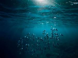 Join The Effort To Improve The Health Of Our Oceans