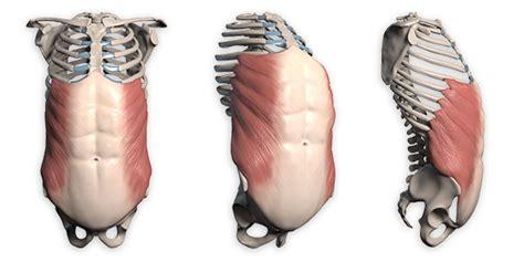 Vnitřní břišní svaly