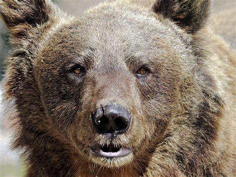 ein tierschutzprojekt kein zoo der baer ist los im