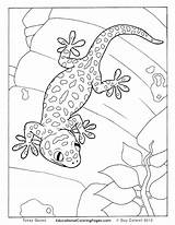 Gecko Leopard Coloring Pages Printable Print Getcolorings sketch template