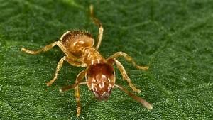 Ameisen Im Garten : ameisen im garten und rasen bek mpfen und vertreiben ~ Frokenaadalensverden.com Haus und Dekorationen