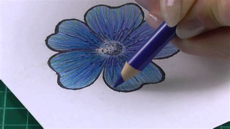 colouring technique  coloured pencils flowers