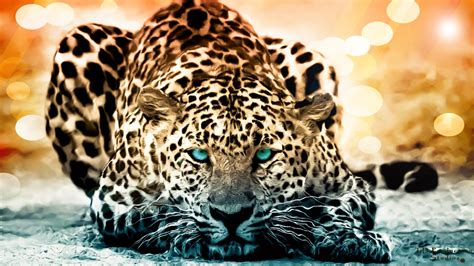 coolest jaguar cat jaguar documentary the year of the cat history
