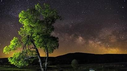 Sky Night Stars Tree 1080p Background