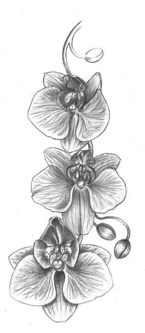 Grey Ink Orchid Flowers Tattoos Design | Orchid tattoo