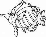 Angel Coloring Fish Pages Drawing Nice Angelfish Getcolorings Getdrawings Drawings sketch template