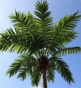 Palmier Artificiel Gifi : palmier artificiel a vendre la pilounette ~ Teatrodelosmanantiales.com Idées de Décoration