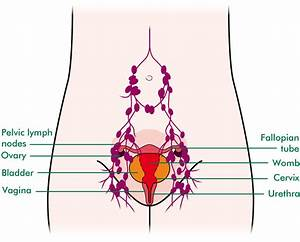 Diagram Of Bladder And Ovaries  Diagram  Free Engine Image