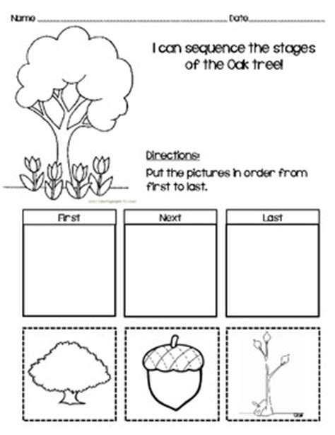 sequencing worksheet for oak tree by teaching tpt