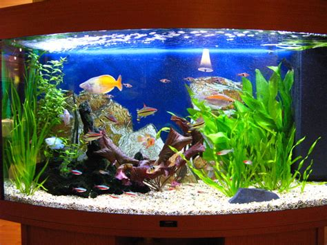 juwel vision 180 aquarium eheim filters vecton uv