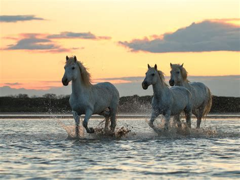 white horse motion   river hd wallpapers