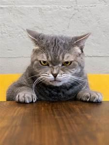 Katzenbilder, Die, 30, Lustigsten, U0026, S, U00fc, U00dfesten, Bilder, Von, Katzen