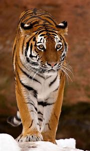 3D Animal iPhone Wallpapers - Top Free 3D Animal iPhone ...
