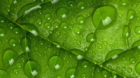 Stock Images Leaf, Drops, Green, 4k, Stock Images #17757