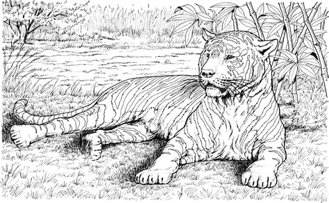 Coloring Wildlife by Free Tiger Coloring Pages