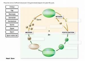 Wiring Diagram  30 Plant Cycle Diagram