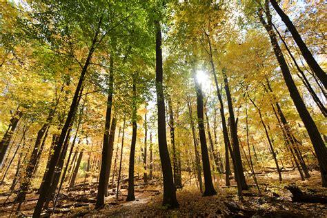 oberhauser named director  arboretum